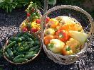 Donáška zeleniny